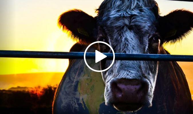 cowspiracy dokumentti vegaani